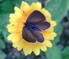 Butterfly by fwzahd