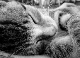 sleeping beauty by doniebawzieta