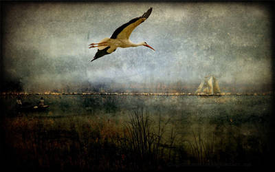 Stork in flight by CouchyCreature