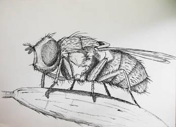 Fly by Citizzen