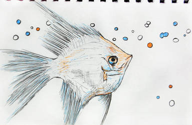 fish03 by Citizzen
