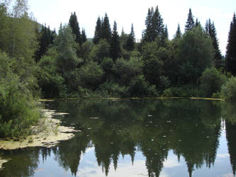 Forest Pond by ForestGirlStock