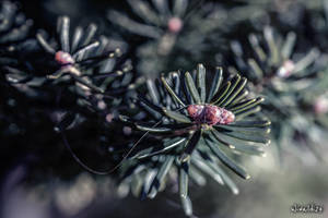 Awakening of spring by wiwaldi24