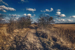 Walk a muddy road by wiwaldi24
