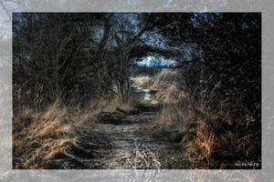 Forest Road by wiwaldi24