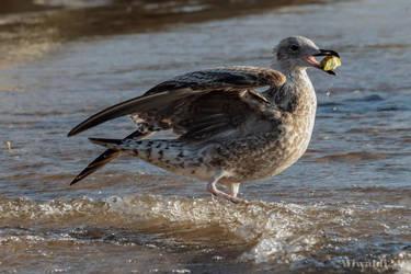 The Seagull by wiwaldi24