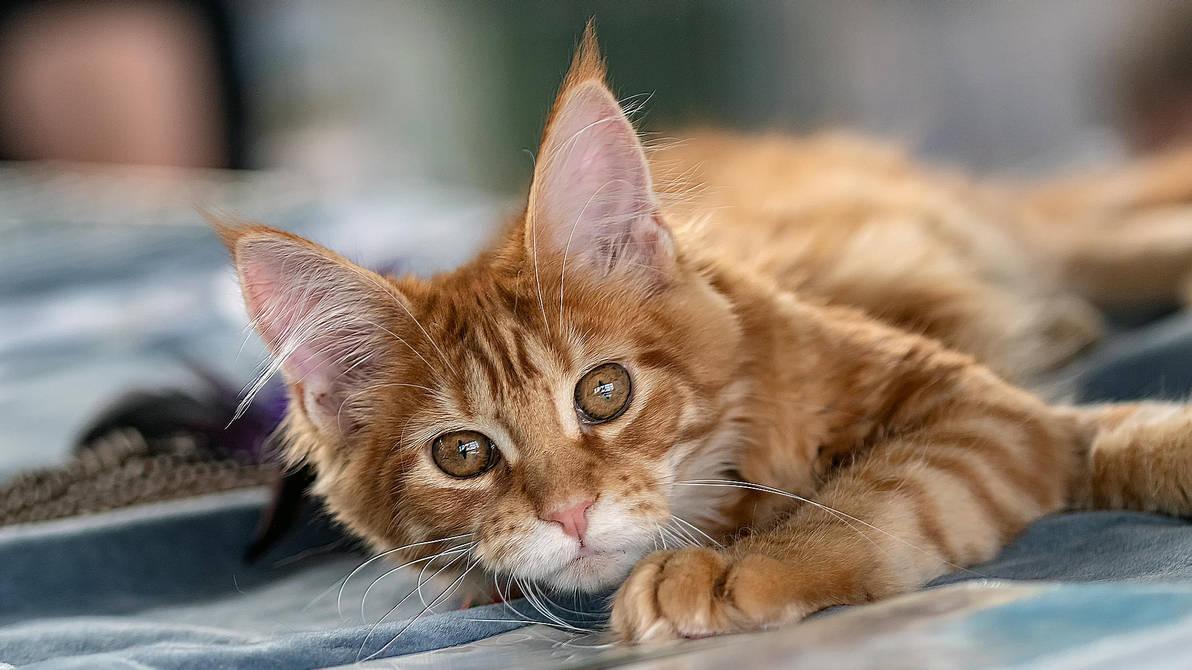 Kitten by wiwaldi24