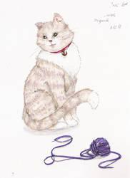 Domestic Cat by SashiSama