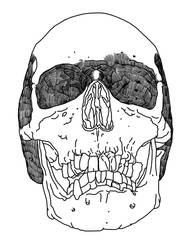 Unfinished skull by simonh4