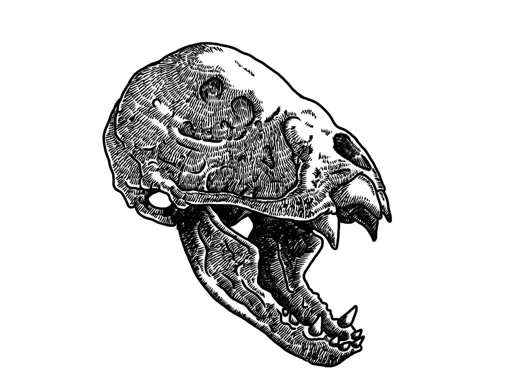 Vampire bat skull, take #2 by simonh4