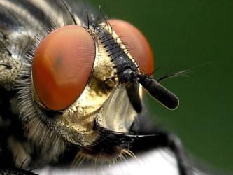 Just a fly... by zwierzak
