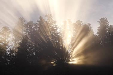 Shine Through Me by MaximeDaviron