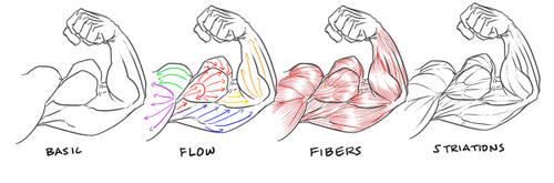 bicep flex definition guide by NewberryChucks