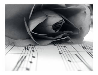 monochrome of rose and notes by starmagnolia