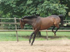 Horse Stock Orlando 7 by Yumani-Chan