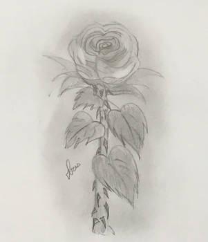 A beautiful rose~  by BloomingArtistIris