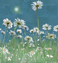 Summer daisies in sunshine by LeCygne