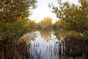 Qatar - Wakra - Mangroves - 002 by GiardQatar