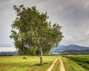 France - Cathar Way - 01 by GiardQatar
