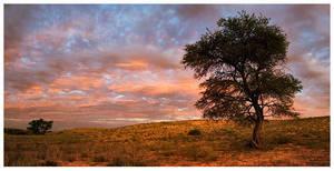 Kalahari Watchman by hougaard