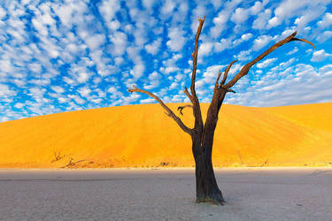 Iconic Deadvlei by hougaard