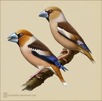Hawfinch by Leaubellon