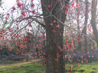 Red Tree by Amandalee1114