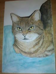 cat by animedrawren
