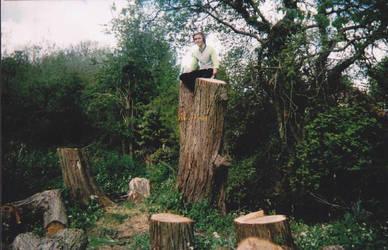 Sitting on a tree by Jaspir