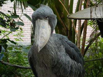 Shoebill Stork by DuhQueenMoki