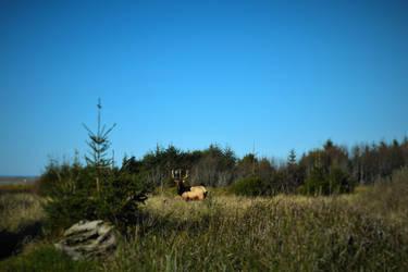 Elk by DuhQueenMoki