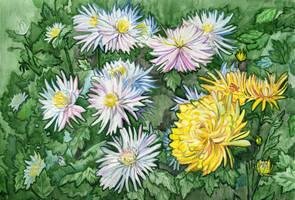 Chrysanthemums by Kaya888