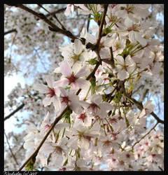 Fresh Blossoms by Lyricalwolf