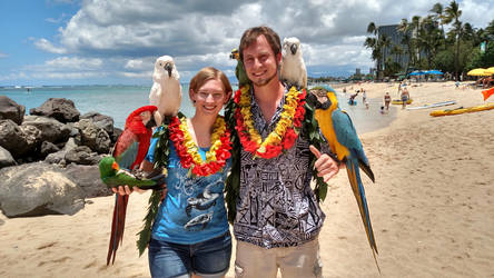 Waikiki beach parrots by parrots4life