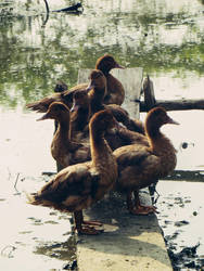 Patos by IsiEnLinea