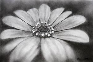 Spring Flower by nairafee
