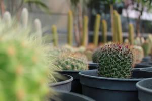 Cactus community by Biolix98