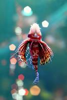 crimson swim by mohdfikree