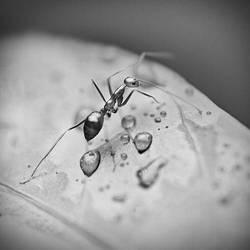under the rain by mohdfikree