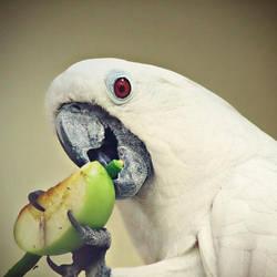 green apple by mohdfikree