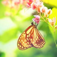 summerfly by mohdfikree