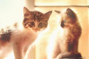 kittens' summer by mohdfikree