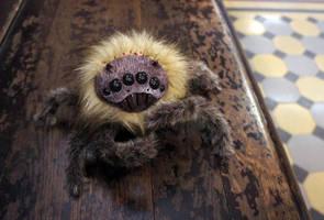 Pretty Spider by Werdiga