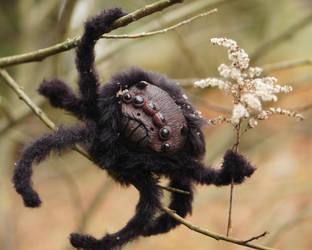 Black Spider by Werdiga
