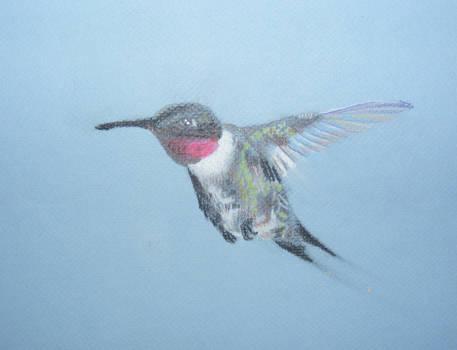 Framed Hummingbird by Dandy-L