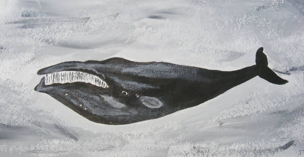 Right Whale by Dandy-L