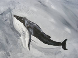 Humpback Whale by Dandy-L