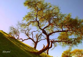 downhill tree at sunset by Zlata-Petal