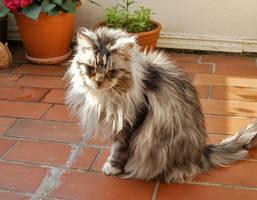 my cat... by FeliFee