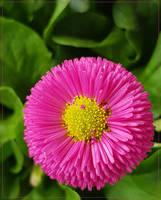 Pink Spring.... by FeliFee